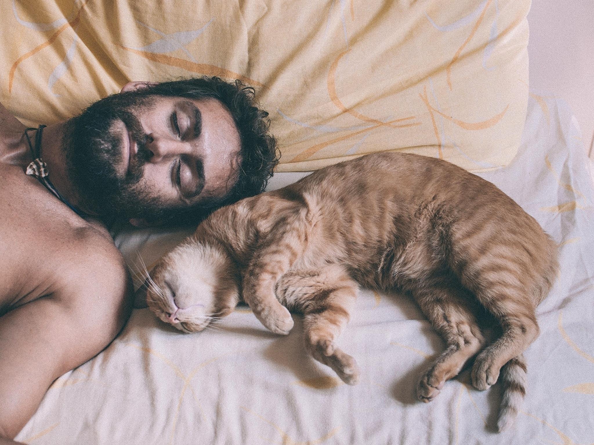 Cats Men Beard Sleep 463705 2048x1536