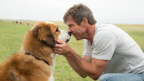 Στα λέει και η επιστήμη: Κολλητάρι σαν τον σκύλο ΔΕΝ θα βρεις