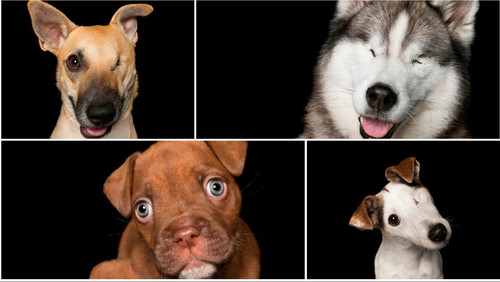 Πρόβλημα έχουν όλοι εκείνοι που σε ΑΥΤΗ τη φωτό βλέπουν σκυλιά προβληματικά