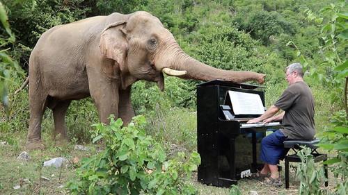 Την πιο βαθιά μας υπόκλιση στον πιανίστα που παίζει μουσική σε τυφλούς ελέφαντες