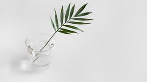 Φοιτητικό σπίτι: Πέντε φυτά για να διώξεις το άγχος