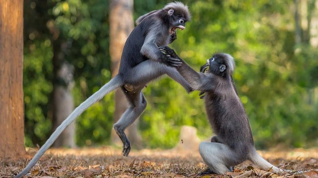 Στον διαγωνισμό αστείων εικόνων της άγριας φύσης γέλασε μέχρι και το παρδαλό κατσίκι
