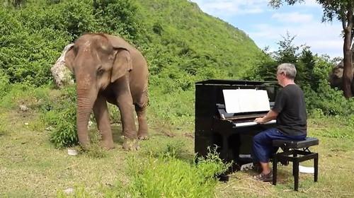 Ο πιανίστας που συγκινεί τους ελέφαντες με την μουσική του