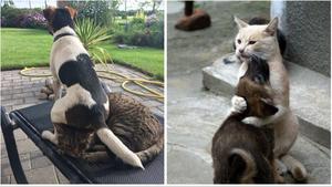 Κανένα μίσος μεταξύ γάτας και σκύλου