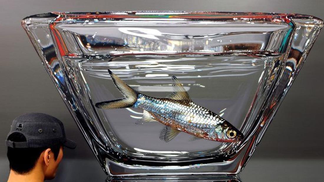 Βλέπεις μια απλή φωτογραφία με ένα ψάρι σε ένα ποτήρι. Τι άλλο;