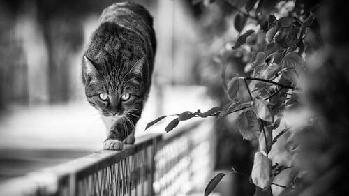 Αυτό που βλέπεις μια γάτα να περπατάει στο κάγκελο και σου κόβεται η ανάσα