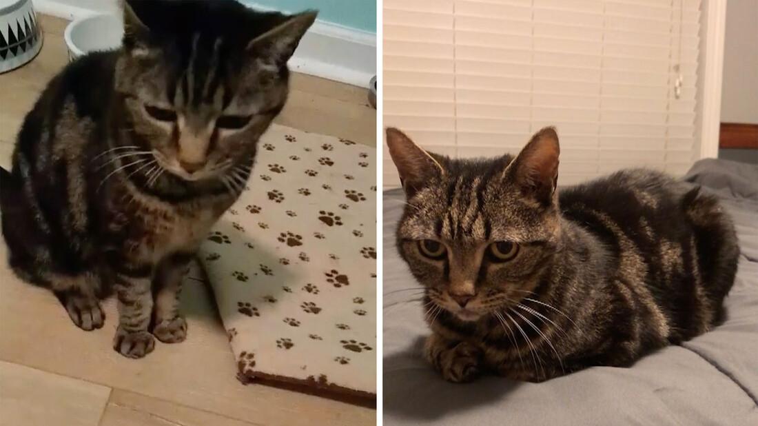 Πώς είναι να ξαναβρίσκεις τη γάτα σου μετά από 13 χρόνια;