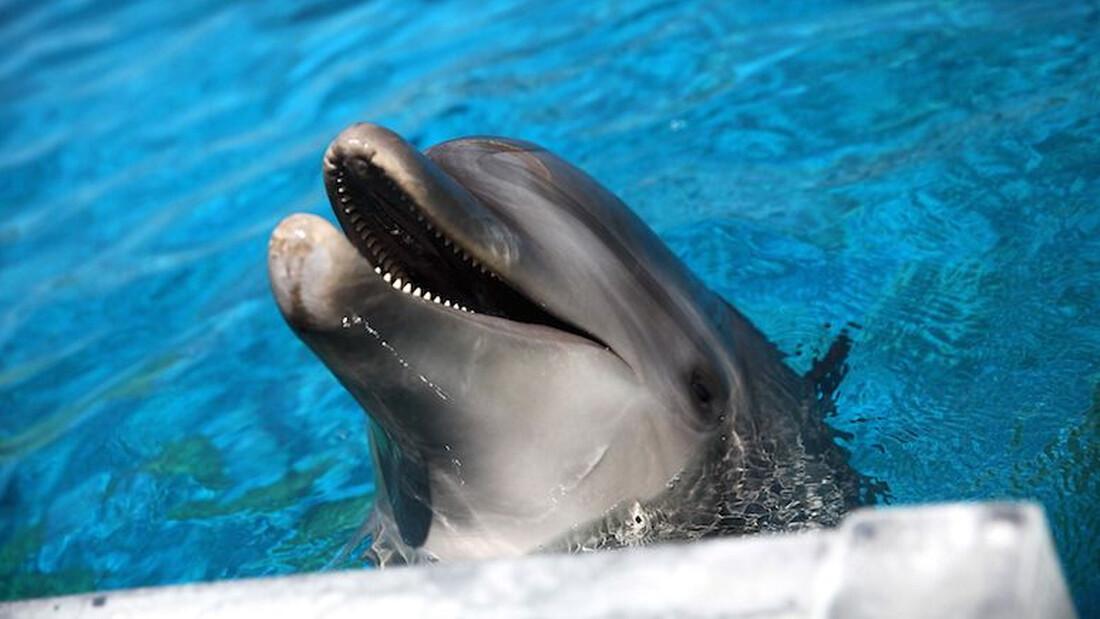 Ήξερες ότι τα δελφίνια βγάζουν μόνα τους ονόματα;
