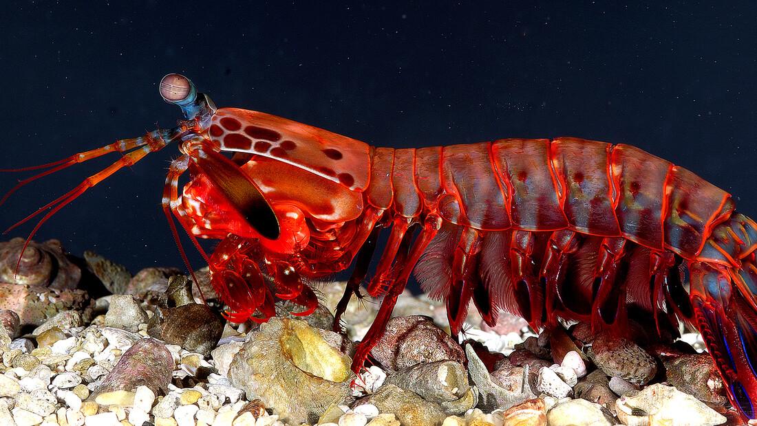 Αυτά είναι πέντε από τα πιο παράξενα πλάσματα στον κόσμο