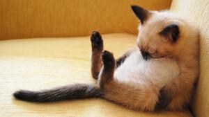 Paranormal Activity... γάτας!
