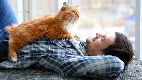 Ας παραδεχτούμε ότι οι γάτες κάνουν την καλύτερη παρέα