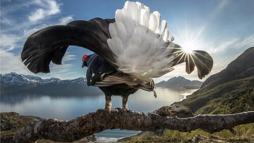 Αυτή είναι μόλις μία από 6.500 υποψήφιες φωτογραφίες της Άγριας Φύσης