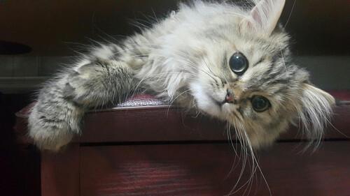 Μόνο αγάπη για τις 10 ωραιότερες γάτες στον κόσμο