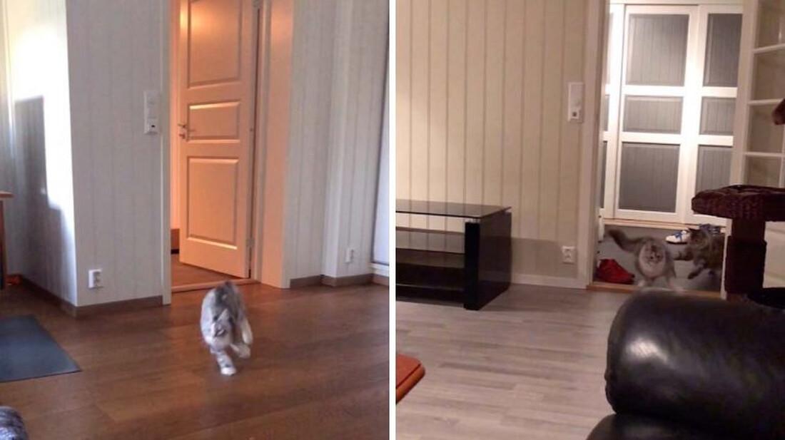Τρελαίνονται και σένα οι γάτες σου όποτε ακούνε να τους βάζεις φαγητό;