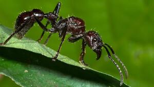 Οι γειτονιές με τα περισσότερα έντομα. Δεν πάει το μυαλό σας!