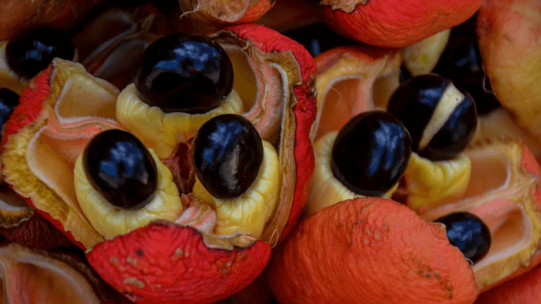 Μην τα δοκιμάσεις ποτέ: Τα πιο επικίνδυνα φαγητά στον κόσμο