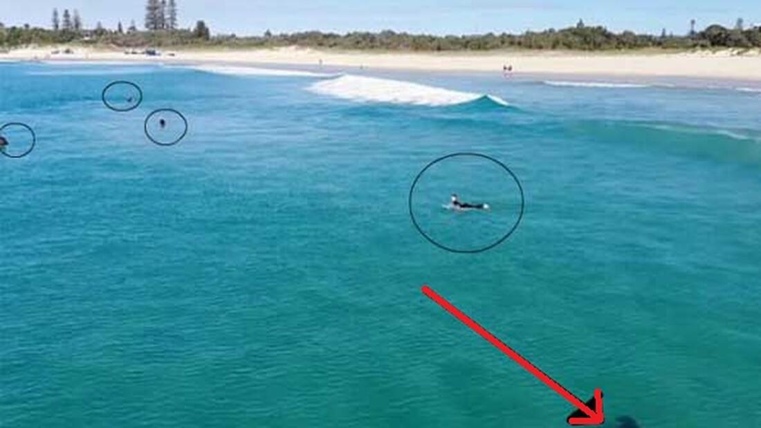 Ανατριχιαστικό: Κολυμπούν και δεν παίρνουν χαμπάρι τι είναι από κάτω!