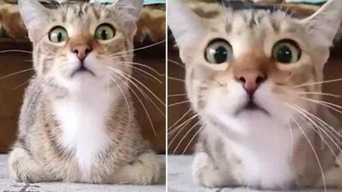 Ο κόσμος έχει τρελαθεί με την γάτα που βλέπει θρίλερ!