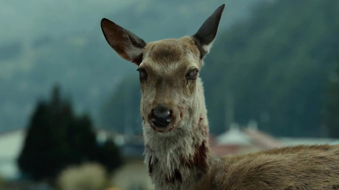 Τι είναι η ασθένεια «Zombie Deer» και γιατί απειλεί τον άνθρωπο;