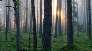 Τα πιο άκυρα πράγματα που μπορεί να πετύχεις στο δάσος
