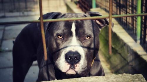 Σκύλος - «διάβολος»: Επιτέθηκε σε γυναίκα και της διέλυσε το πρόσωπο - ΣΚΛΗΡΕΣ ΕΙΚΟΝΕΣ