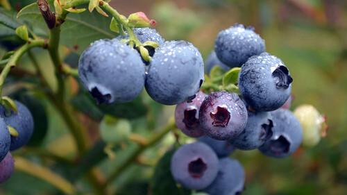Λένε πως αυτό το φρούτο δεν σε αφήνει να γεράσεις!