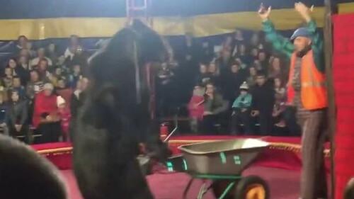 Τρόμος σε τσίρκο: Αρκούδα επιτέθηκε σε θηριοδαμαστή (Σκληρές εικόνες)
