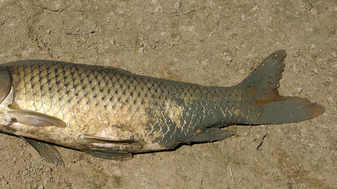Δες το ψάρι που έχει ανθρώπινο πρόσωπο
