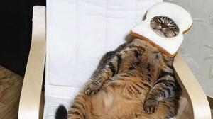 Η γάτα Manggo θα σου κλέψει τη καρδιά με τις εκφράσεις της