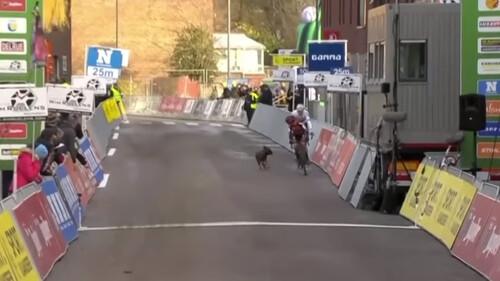 Επικό! Σκύλος πήρε στο κυνήγι ποδηλάτες σε αγώνα! (video)
