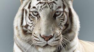 Δες γιατί οι τίγρεις έχουν διαφορετικό χαρακτήρα