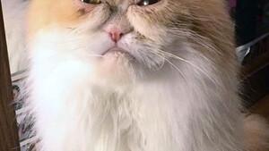Αυτή είναι πιο θυμωμένη γάτα στον κόσμο!