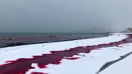 Απόκοσμο θέαμα: Η θάλασσα βάφτηκε με... αίμα - Εικόνες φρίκης