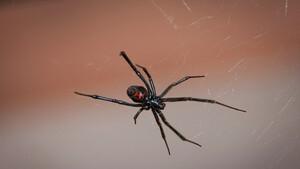 Τρόμος - Τρία αδέρφια πήγαν στο νοσοκομείο από τσίμπημα αράχνης - Δεν φαντάζεστε τον λόγο (photos)