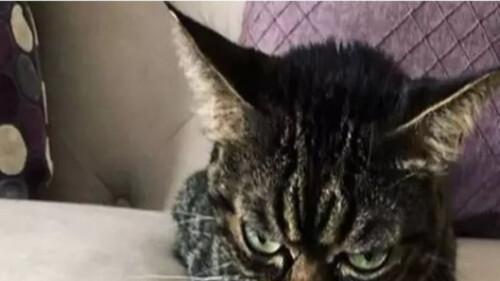 Αυτή είναι η πιο νευριασμένη γάτα του κόσμου
