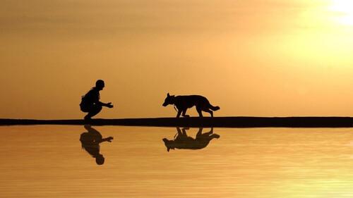 Είδε τον σκύλο να βγαίνει από τη λίμνη με... λεία στο στόμα - Δεν πίστευαν αυτό που κρατούσε (video)