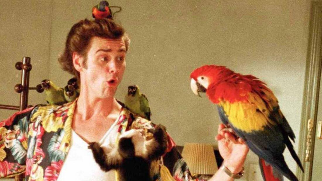 Γιατί οι παπαγάλοι μπορούν να τραγουδάνε και να χορεύουν