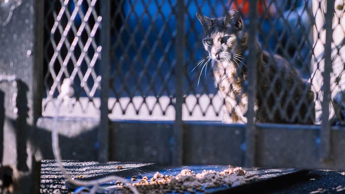 Ένας στρατός από αδέσποτες γάτες καθαρίζει τη Νέα Υόρκη