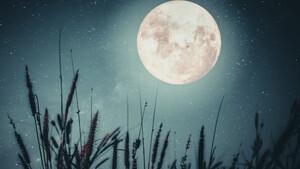Πανσέληνος Σεπτεμβρίου 2020 στους Ιχθύς: Όνειρα με όρια και ημερομηνία λήξης...