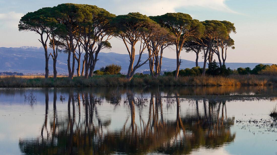 Αυτό είναι το μεγαλύτερο παραθαλάσσιο δάσος της Ελλάδας