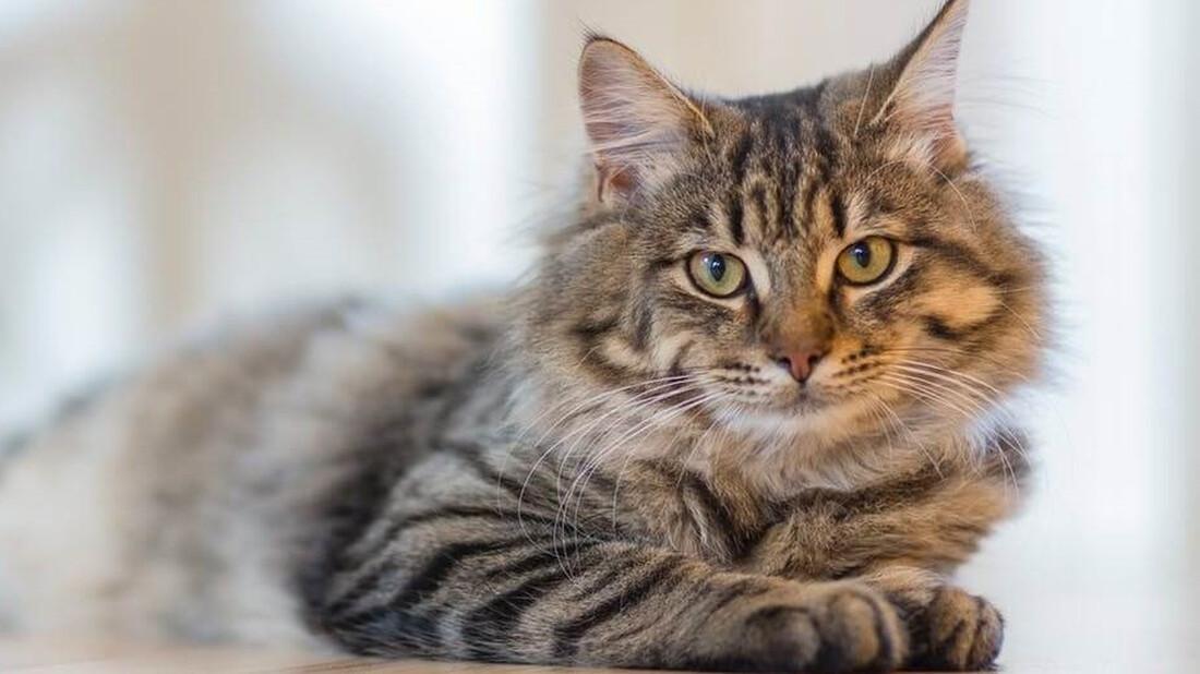 Πόσα χρόνια ζουν οι γάτες τελικά;
