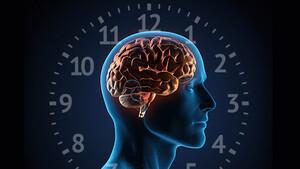 Ποιες ώρες αποκαθίστανται τα ζωτικά όργανα στο σώμα μας;