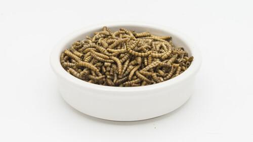 Πώς οι Ευρωπαίοι αρχίζουν να βάζουν στη διατροφή τους τα έντομα;
