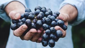 Ποιοι είναι οι λόγοι που πρέπει να ξεκινήσεις να πίνεις organic κρασί;