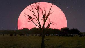 Πώς να τραβήξεις μία σωστή φωτογραφία της ροζ πανσέληνου του Απριλίου