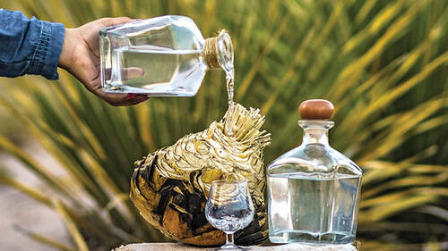 Sotol: Ένα ιδιαίτερο ποτό από το Μεξικό σε περιμένει να το ανακαλύψεις