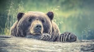 Καλιφόρνια: Φίδια και αρκούδες εισβάλουν σε κατοικημένες περιοχές λόγω ξηρασίας