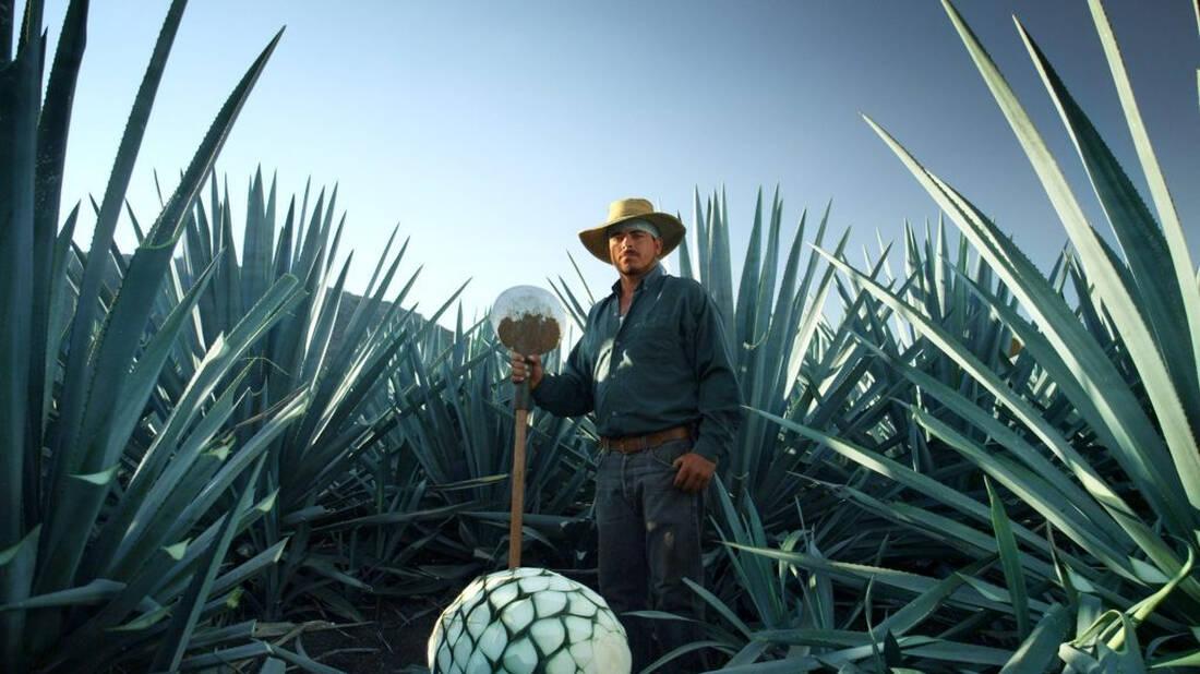 Tequila: Η ιστορία ενός λαού κι ενός τόπου μέσα από ένα ξακουστό ποτό