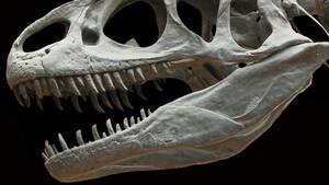 Έρευνα: Ανακάλυψαν μεγαλύτερο σαρκοβόρο δεινόσαυρο από τον T Rex