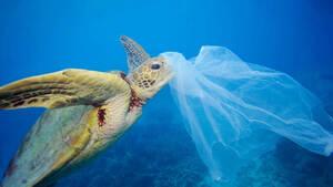 Έρευνα: Γιατί το 84% των πλαστικών του κόσμου ξεβράζεται στη Μεσόγειο;